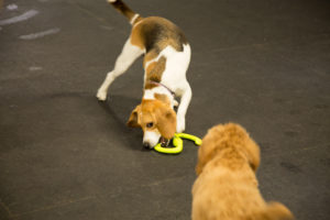 Bella & Baxter playing in daycare